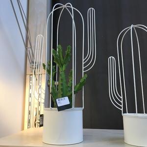 Kruka kaktus (mellan)